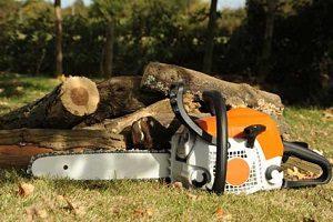 abattage-arbre-gironde