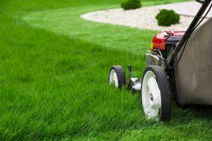 devis-tonte pelouse